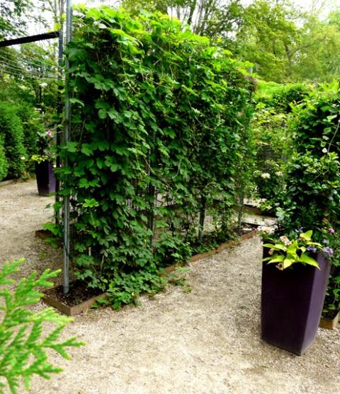 June 20 maze view 2 sm