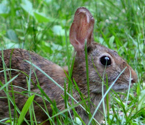 Bunny 3 sm
